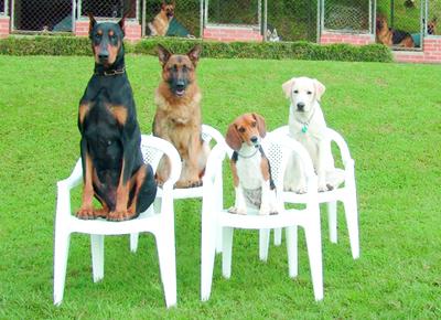 Dog Training Tucson Photo