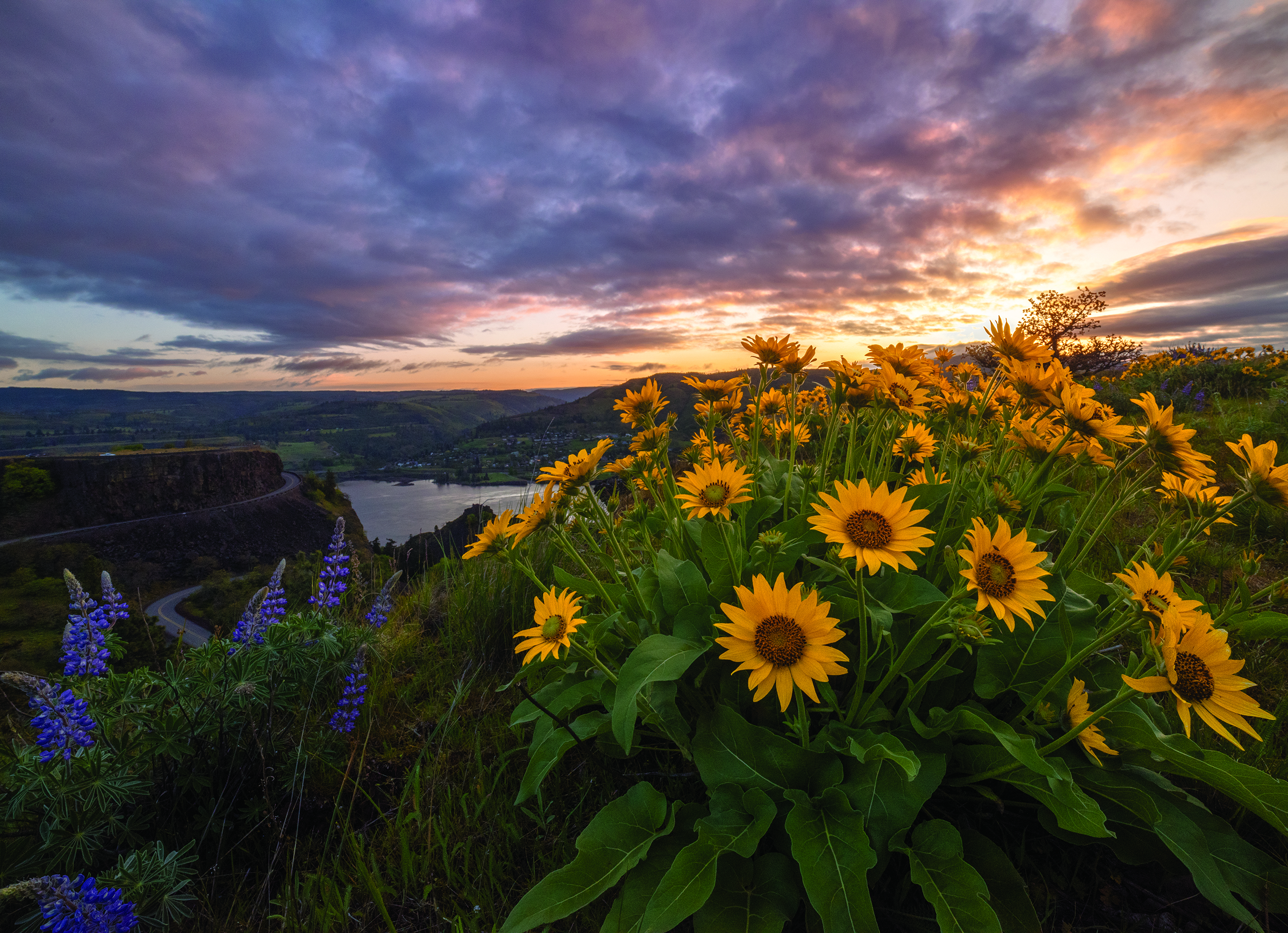 Rowena Crest Sunrise with balsamroot flowers