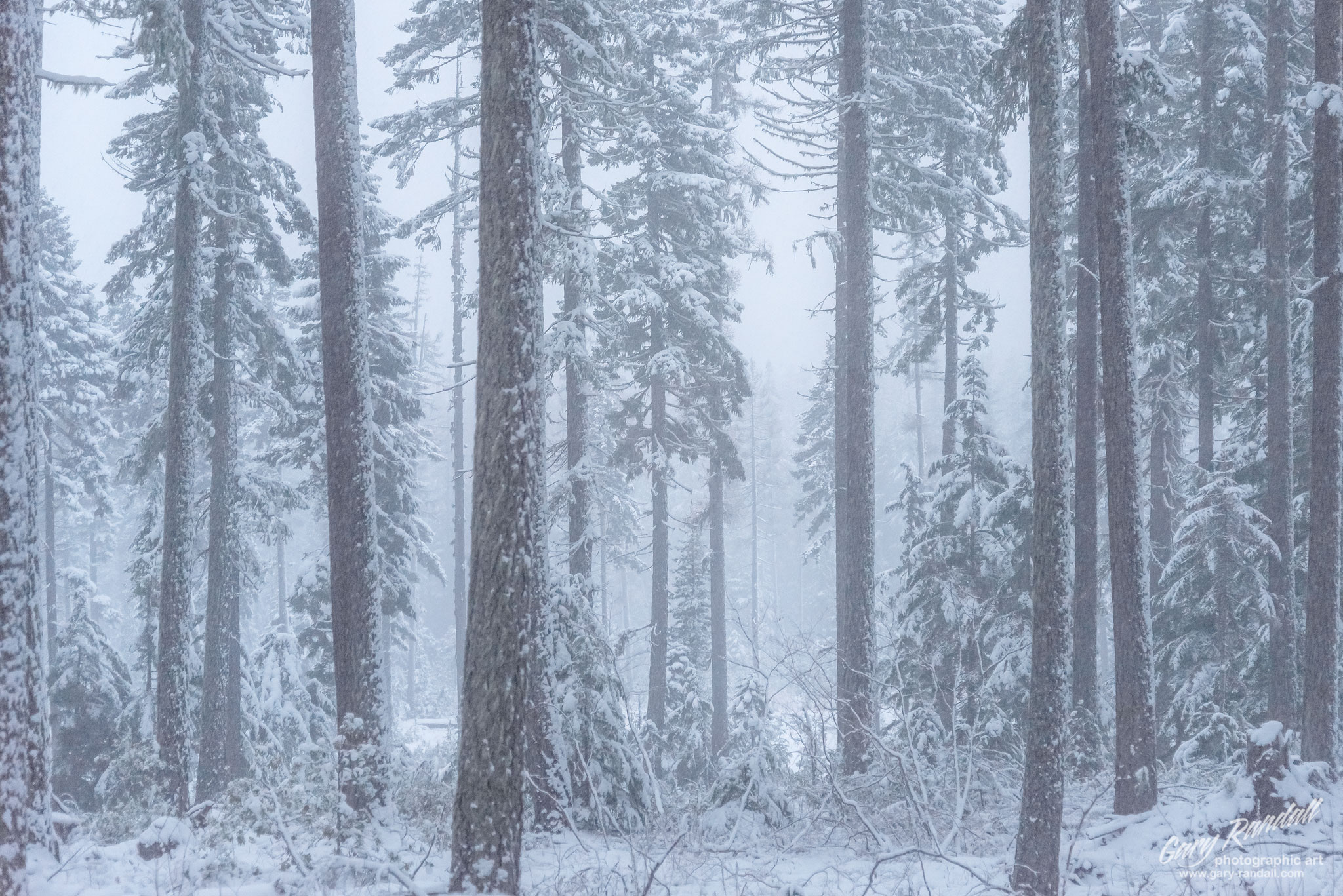 Snowy Forest Scene
