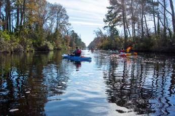 Dismal Swamp Canal Trail