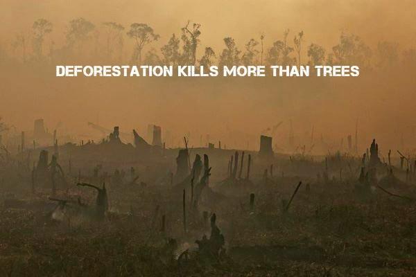 deforestation and endangered species
