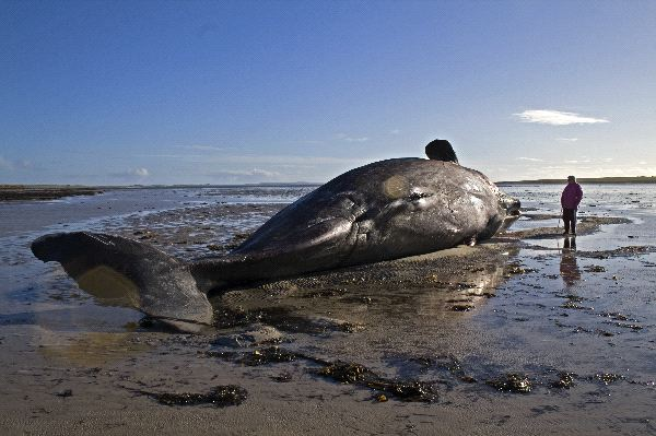 dead whale and prion disease