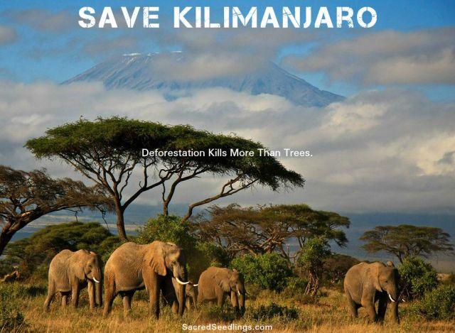 Save Kilimanjar