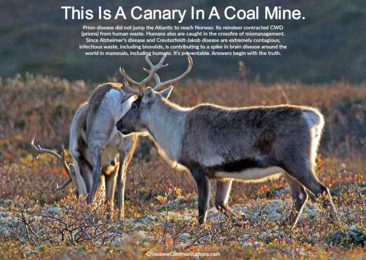 CWD reindeer Norway