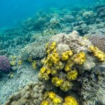 Coral off the Sunlover Reef Pontoon
