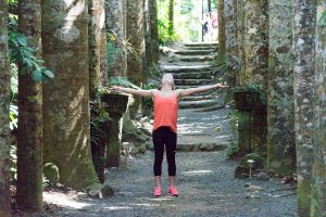 Miss16 in the Queensland Kauri Pine grove