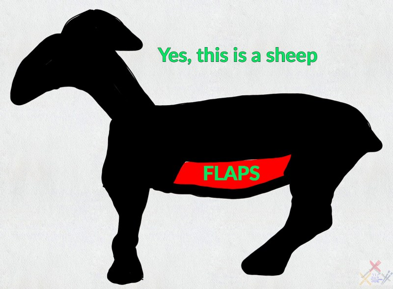 Yes, this is a sheep I drew displaying where the mutton flaps are Gary Lum