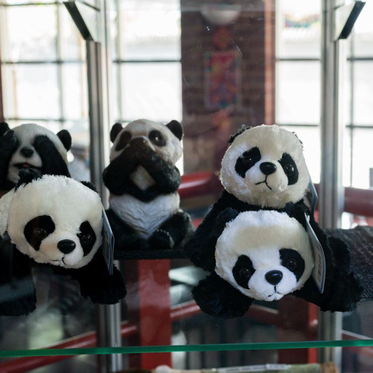 Pandas at Golden Dragon Museum, Bendigo Gary Lum