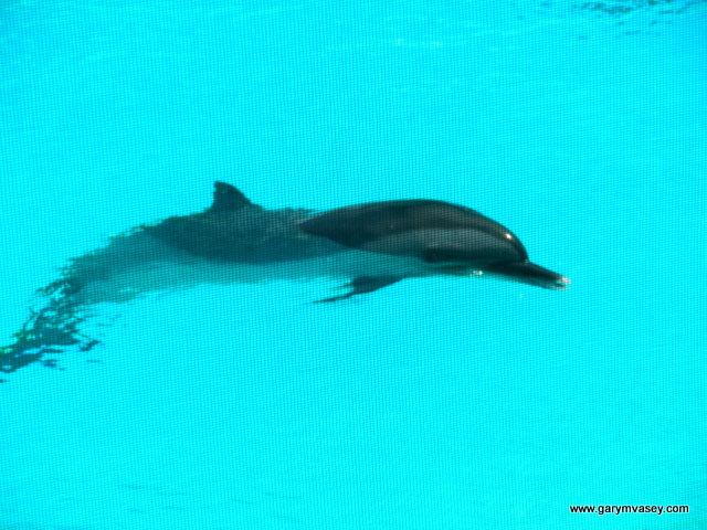 Deni's favorite - Dolphins