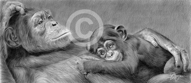 chimpanzee-mother-baby-commission