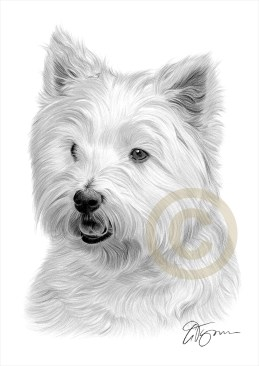 West-Highland-White-Terrier-3