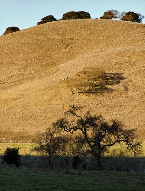 Hillside along Hwy 101--portrait