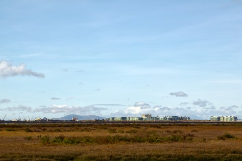 Looking across a salt marsh at bay side development