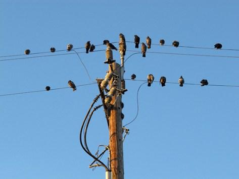 Pigeons on lines