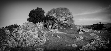 Rocky hillside with oak tree