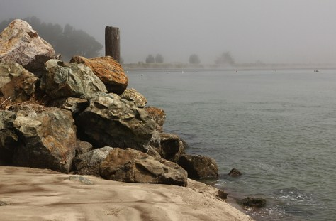 Fog lifting on Bolinas lagoon