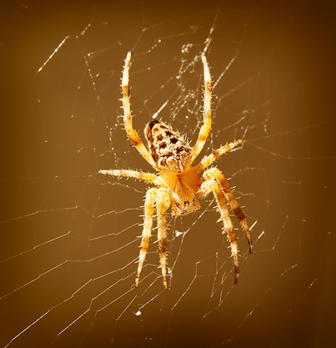 Garden spider by the clothes line