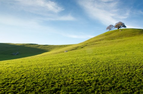 Two trees on a green hillside