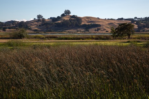 Petaluma river view from wetlands wastewater area