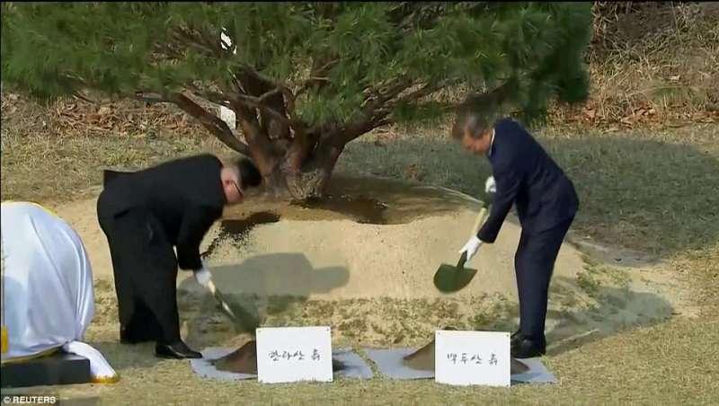kim-jong-un-moon-jae-in-piantano-alberi-1009397