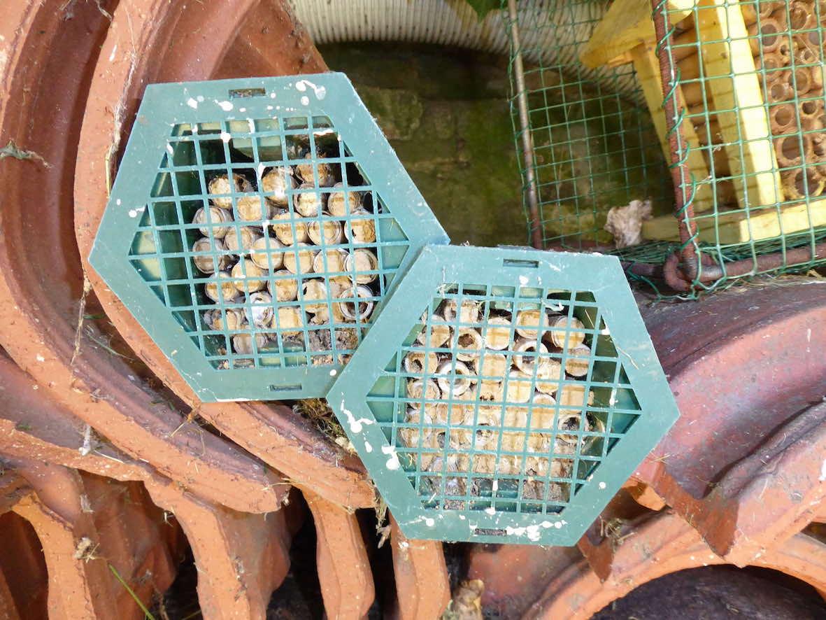 Les abeilles sauvages et la recherche