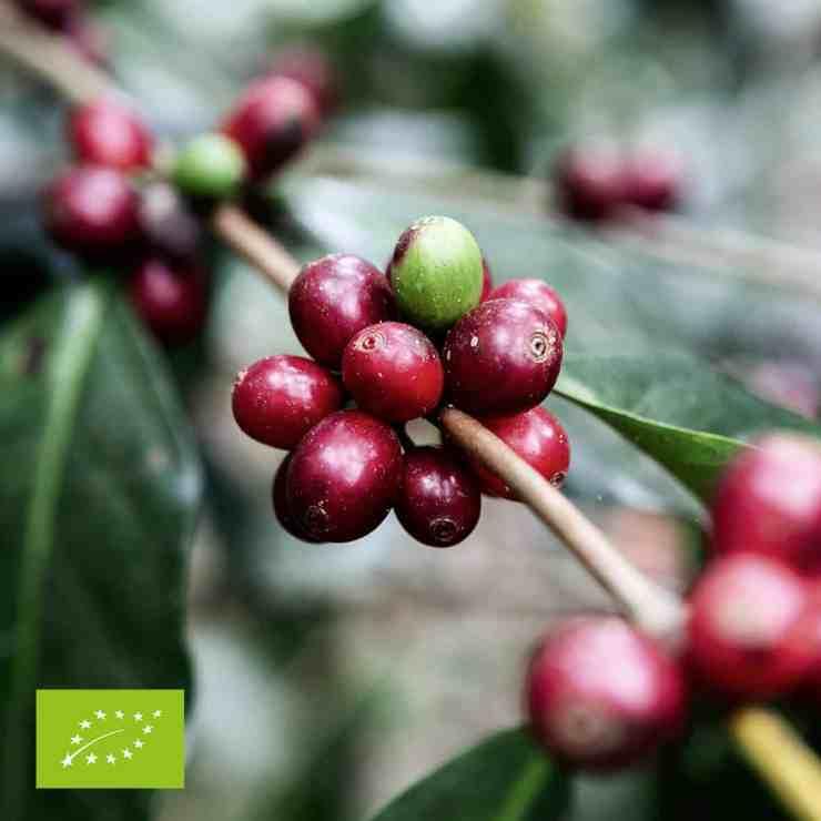 Ekologiskt kaffe
