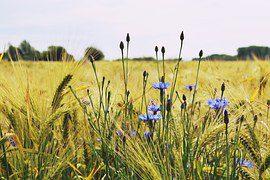 Sommerfrische genießen im Mansfelder Land