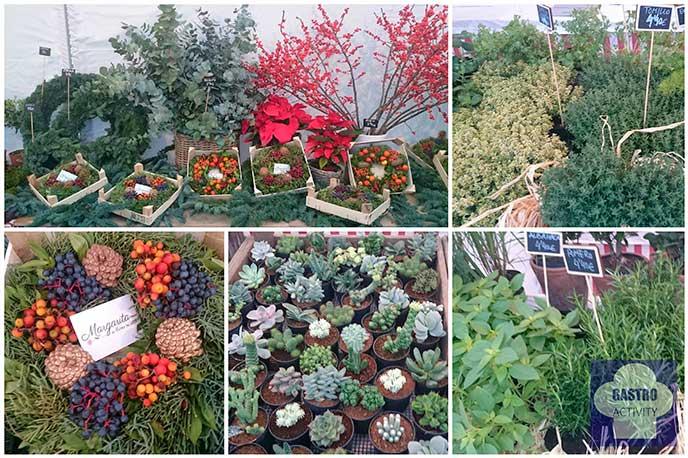 Plantas aromáticas de Margarita se llama mi amor en Mercado de Productores Matadero Madrid