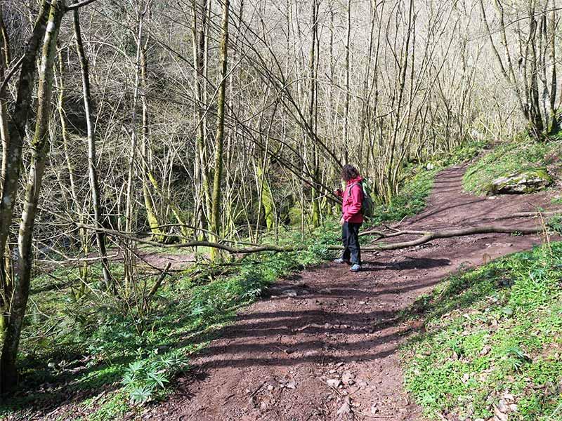 Bosque Ruta de las Xanas Asturias