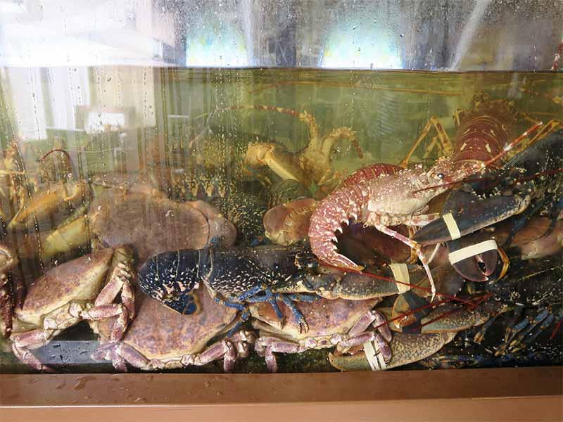 Restaurante Tasmallo A Guarda Pontevedra vivero de langostas