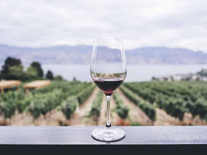 Vinissimus Vinos Canarios