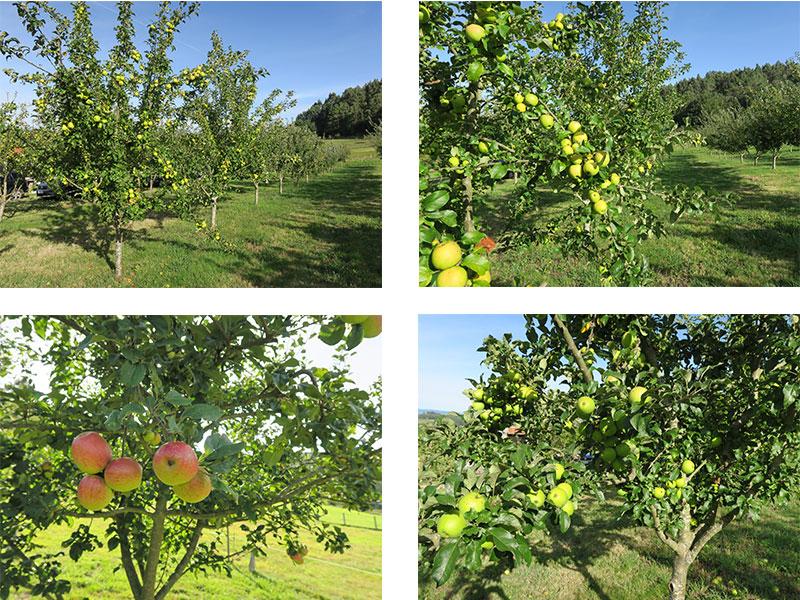 Manzanos ecologicos CRAEGA sidra Rabiosa