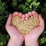 alimentacion_sostenible