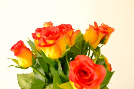 roses, yellow, red, flowers, colourful