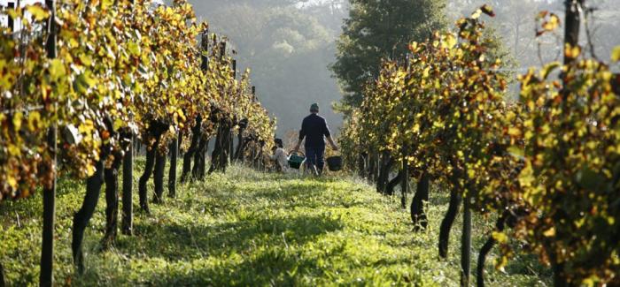 En vinguide til verdens mest kendte vinområde: Bordeaux