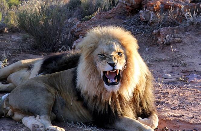 Enke der dateres i Sydafrika