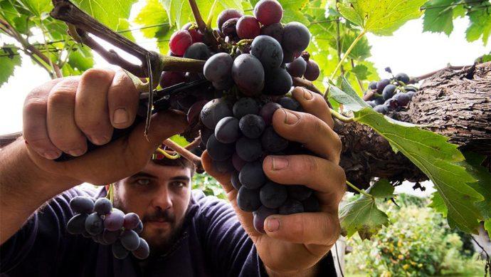 Caminos de Vino Uruguay
