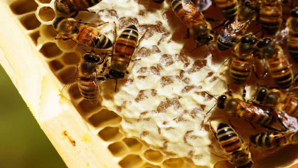 honeycombes-358124-960-720