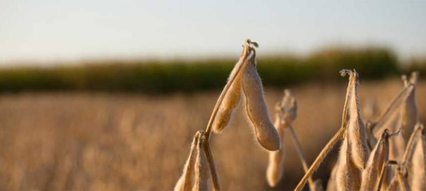 Crop Futures: How Surplus Breeds Demand | James Barnett