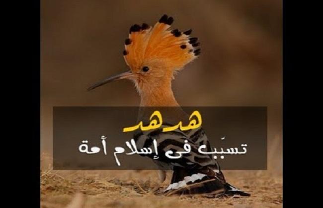 قصة نبي الله سليمان مع الهدهد وبلقيس ملكة سبأ 2 3 بوابة الأهرام