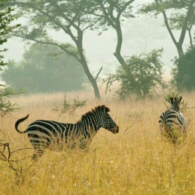 Lake Mburo National Park Tour - Uganda