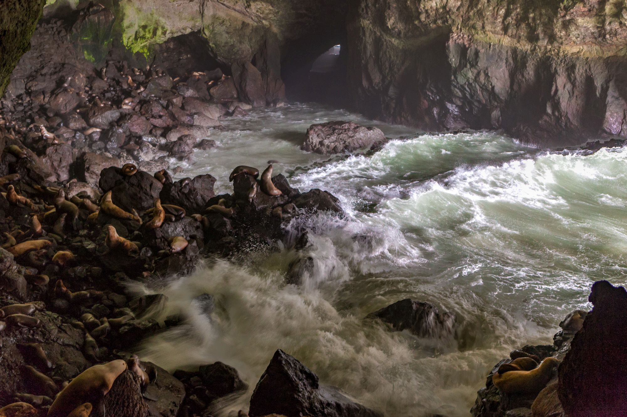 Visit the Sea Lion Caves in Oregon - Gate to Adventures