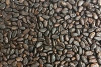 Food-Cocoa-Beans1-300x200