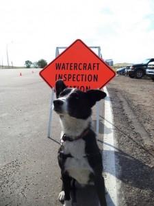 Sniffer Dog at Alberta Border