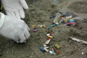 Photo courtesy of the Great Canadian Shoreline Cleanup and the Vancouver Aquarium