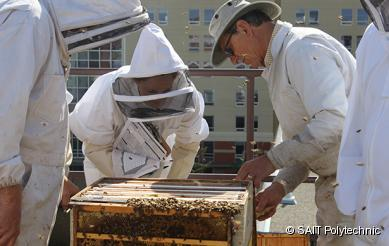 Chef Instructor Andrew Hewson and ARIS Researcher Aja Horsley tend to the SAIT honeybees. (photo courtesy of SAIT)