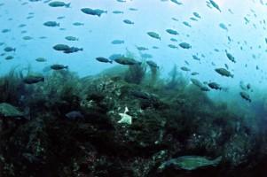 Bowie Seamount, Pacific Ocean, Canada
