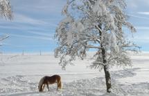 winter_horse2