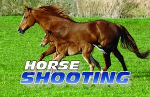 Two Hills RCMP received a report that between November 13th and November 15th unknown persons shot a horse while in a pasture on Range Road 190.