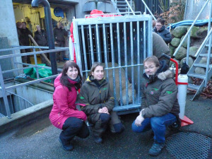 Milak anesthetized to enter the cage at Aalborg zoo. Josée Tremblay, Zoo sauvage veterinarian, Trine Hammer Jensen, Aalborg zoo veterinarian and Jens Sigsgaard, Director of the animal collection. (CNW Group/Centre de conservation de la biodiversité Zoo sauvage St-Félicien)